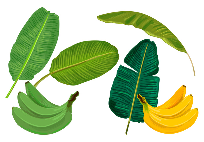 wallpaper vintage vacation tropical tree summer stripes simple silhouette set retro plant pattern palm organic nature natural line leafs leaf jungle isolated illustration herbal Hawaiian green graphic fresh foliage floral element drawing decoration color collection cartoon branch botany banana leaves banana leaf banana background