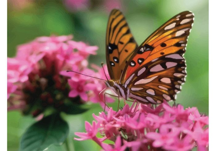 sunny summer spring season plant pink petal outdoors nature monarch light life garden fly flowers elegant day butterfly blossom