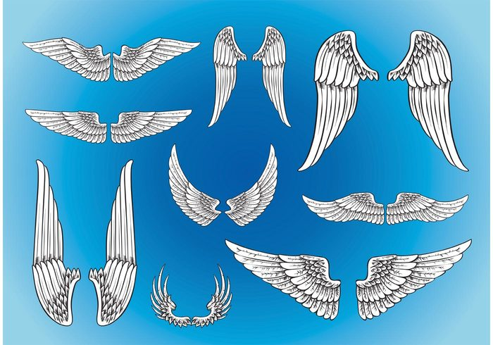 wings wing symbol speed power motorcycle insignia hawk griffin freedom fly flock feather eagle bird biker animals angel