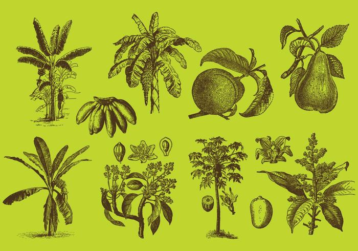 wallpaper vegetarian tree seed plant pear paint nature natural leaf isolated Healthy health garden fruit food flower farm eat drawing draw Diet concept closeup cartoon branch blossom banana tree banana leaf banana apple agriculture
