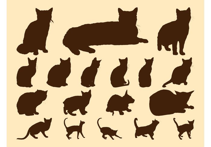 stand sit silhouettes silhouette rest play pets pet Kittens kitten Domesticated cats cat Breeds breed