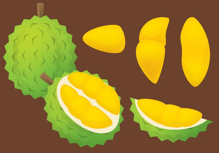 yellow white tropical symbol sweet summer strong snack smelly smell scent Ripe plant organic olive obesity nutrition nature natural isolated illustration Healthy green graphic fruit freshness fresh food fat exotic energy durian drawing design delicious color cartoon Calories background Asian asia art