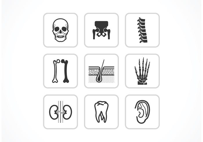 vector Tooth symbol skin skeleton set science organ kidney Joint icon human ear Human heart bones and joints Bone body anatomy