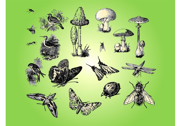 wood plants park nature mushrooms insects forest fly Flora design Fauna vectors duck bug birds beetle ant animals