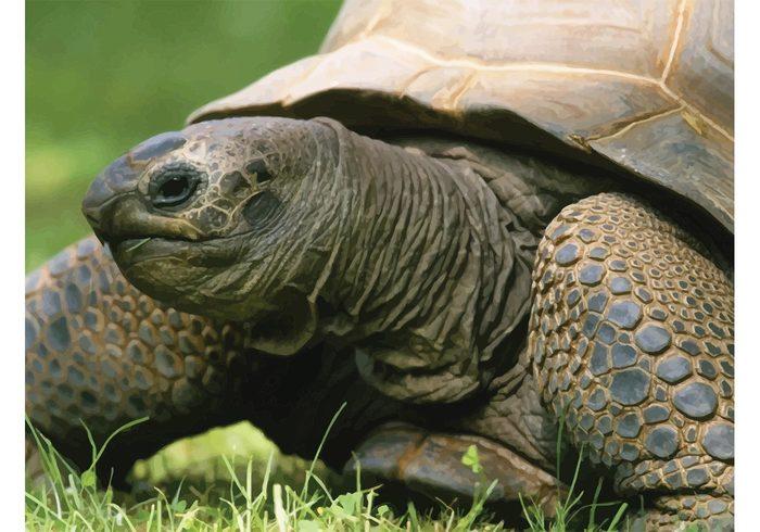 wildlife walk turtle Tortoise space Slow shield shell scale reptile Omnivore nature green grass Creep Crawl armor animal