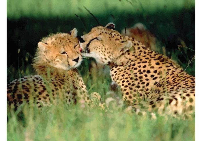 savanna playing hunter grassland grass fur Feline Fastest Cheetahs cheetah cat camouflage Black spots beautiful animal
