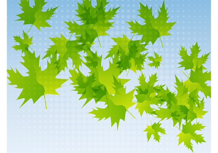 26pzvyazjhdt157 Fresh Leaves