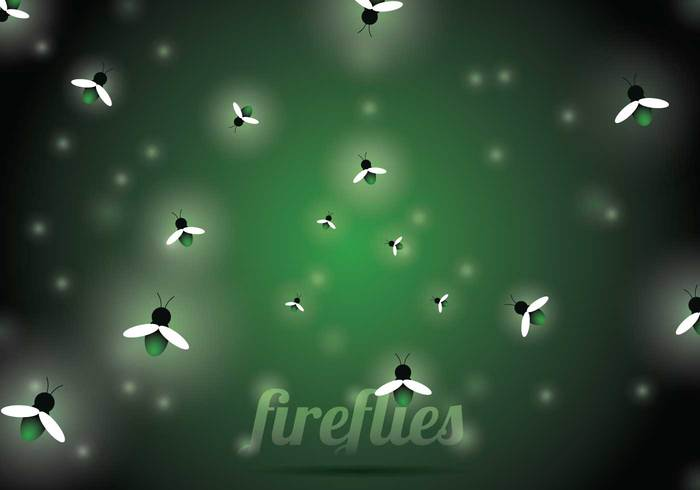 summer peace night mystical lights light insect green glowing glow firefly fireflies firebug fire fly fairy evening effect design bug beautiful background