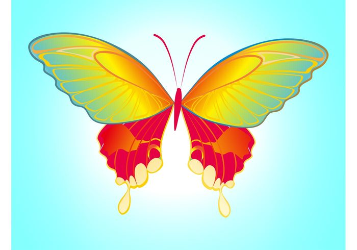 wings spring nature insect fauna decoration colors colorful butterfly body antennas animal