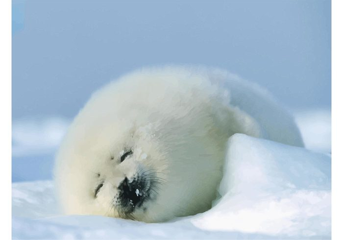 white wallpaper vector sleeping Seal animal seal sea life resting fur fluffy cute Coat Baby seal