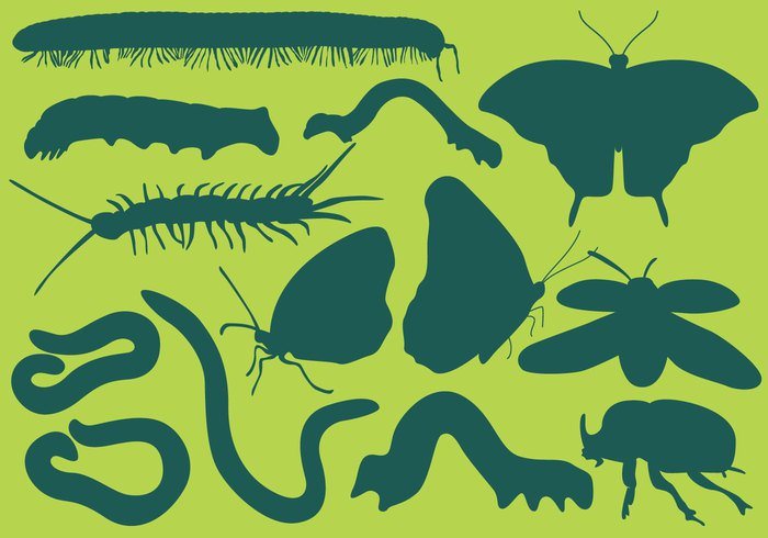 worm wildlife wild vintage vector tubular Tentacle summer stripe spring small slug sketch silhouette segmented scolopendra Poisonous plant Pest nature natural moth millepede mascot Larva isolated invertebrate insect illustration icon graphic garden fauna engraving education earthworm drawing design Crawl Centipede caterpillar camouflage butterfly bug Biology beetle background antenna animal