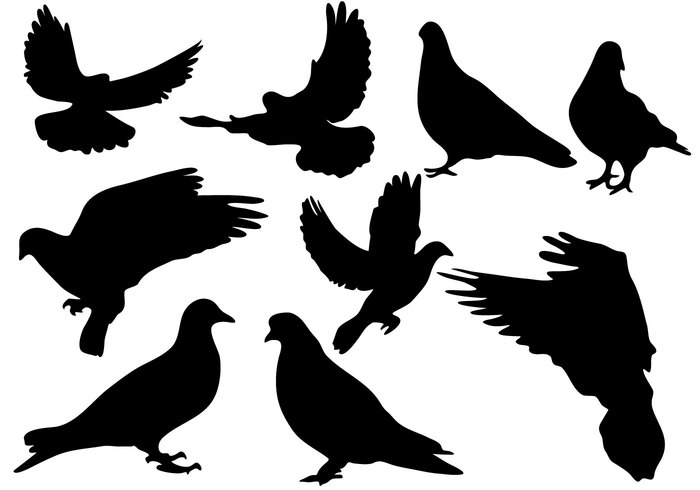 wing wildlife silhouette religious religion Purity pigeon peace nature love isolated illustration flying bird silhouette flying dove collection bird animal