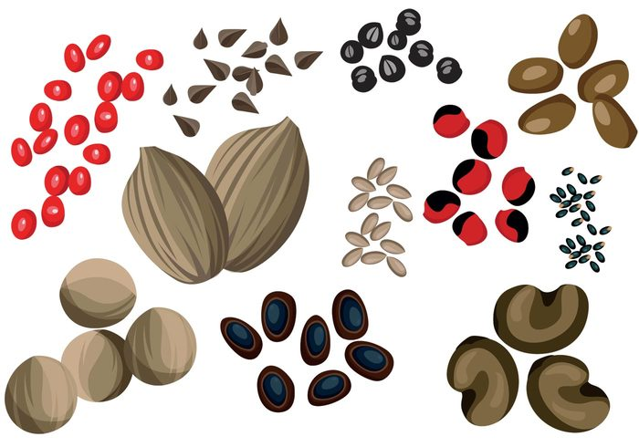 seeds seeding seed Preparation plant Outdoor oat nutrient nurturing nurture nature Herb Healthy healthcare harvest garden food eat cultivation Cultivate corn beans bean agriculture