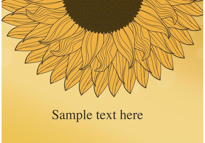 sunflower wallpaper sunflower seed sunflower background sunflower summer sketchy seeds seed plant petals nature natural growth garden flower seeds flower seed flower floral flora doodle botanical blossom blooming background agriculture