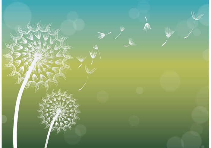 wind weed summer stem soft background sky seed background seed plant pistil overblown outdoors nature mid-air meadow life growth grass garden fragile flying fluffy Fluff flower background flower floral float delicate dandelion seed dandelion cute botany blowing blossom Biology background