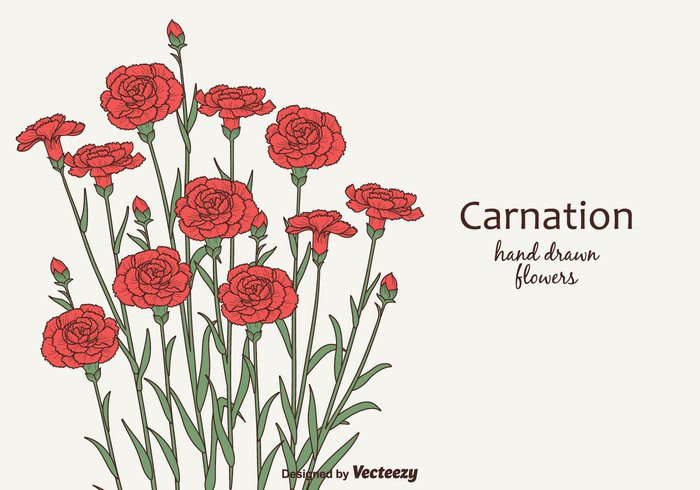 wildlife vector stem sketch season plant nature illustration hand graphic garden freehand flower floral etching engraving drawn drawing decorative decoration decor Composition colored color carnation branch botany blooming Biology beauty background artwork artistic art