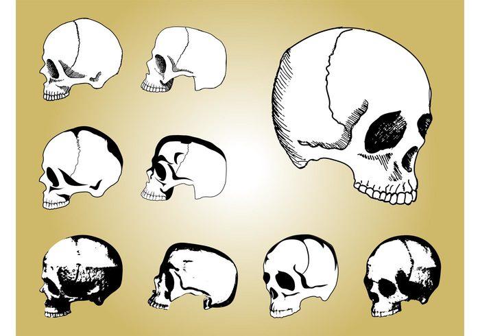 teeth sketches skeleton scary Natural history Jaws hand drawn Eye sockets evolution body anatomy