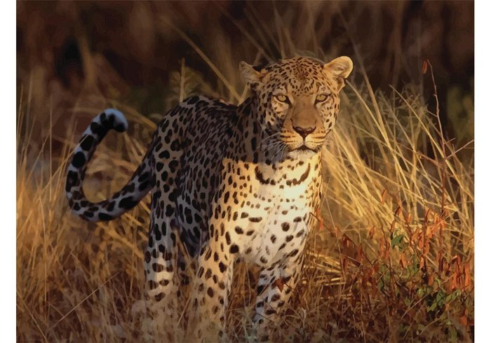 wallpaper savanna nature image grassland Feline Fastest fast close-up cheetah cat camouflage beautiful animal