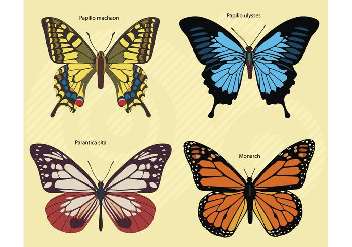 yellow vibrant summer set orange nature monarch fragile flying colorful collection butterfly bright blue beautiful