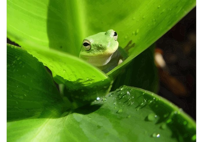 water vector Prince leaf image green frog green frogs frog forest army animals amphibian