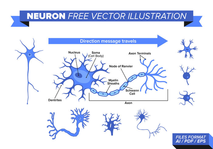 white vector types technology techno system structure spinal sensory science neurons neuron Neurology network nervous nerve motor molecule mesh Mental medical isolated illustration icon Human health future explosion energy diagram data connection cns Cells cell brain bipolar Biology background axon anatomy