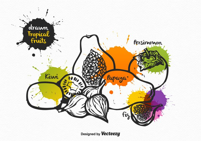 white vintage vegetarian vector tropical symbol summer splatter slice sketch set retro persimmon papaya paint nutrition nature kiwi kitchen isolated image illustration health hand drawn hand fruit food fig elements drawn drawing Diet collection black background art