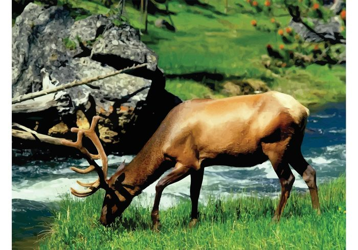 Yellowstone wild western USA summer strong river quiet peaceful park Outdoor male landscape Grazing environment elk eating bull animal america