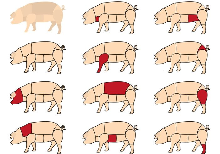 section pork pig meat leg hog ham food farm animals farm eat Divide diagram cut carve Carnivore butchery butcher bacon animal
