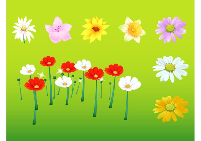 sunflower summer Stems poppy poppies plants petals nature floral ecology eco daisy daisies daffodil blossoms