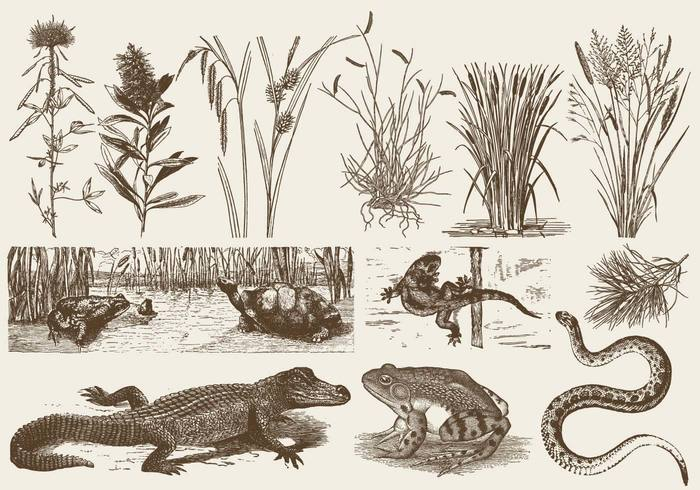 wild white weed vegetation turtle Toad Tails swamp stalk snake rural river plant nature marsh lizard leaf lake illustration Herb growth green grass garden foliage floral flora fauna crumpled crocodile cattails vector cattails bunch branch botany botanical Biology beautiful background autumn