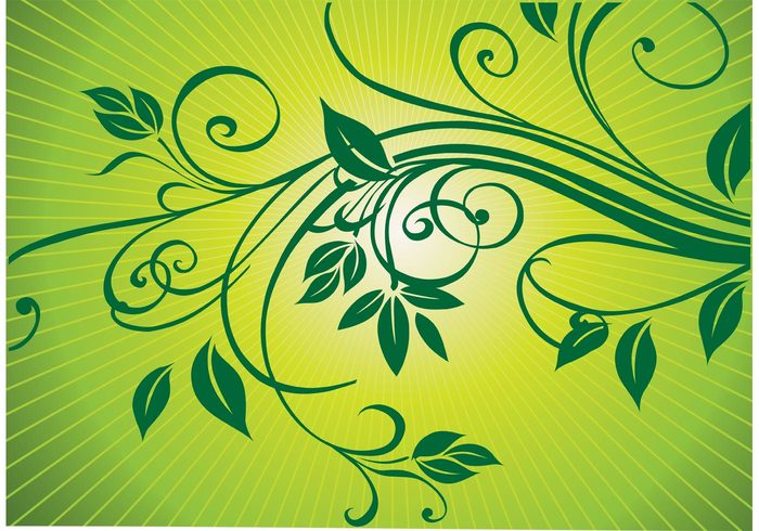 summer spring scroll plant ornament nature leaf growth green flower floral elegance decoration curve curled branch botany background abstract