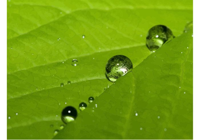 water texture summer spring plant life leaf Healthy growth green garden fresh foliage drop dew close-up botany