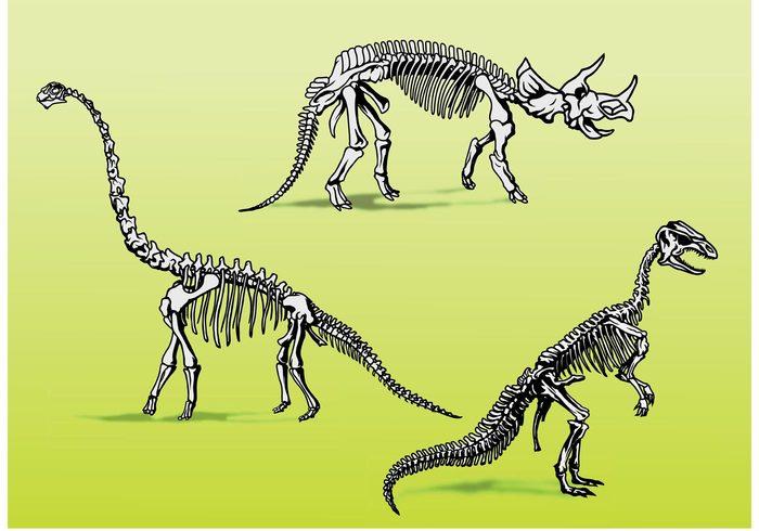 vertebrate Tyrannosaurus tyrannasaurus rex trex t-rex skeleton scary reptile prehistoric predator museum fossil fierce fearsome Extinct exhibit dinosaur bones dinosaur bones animal