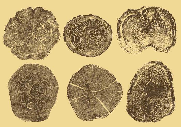 Years wooden wood wallpaper trunk tree rings tree ring tree timber textured texture structure striped Split section round ring process plant pine old nature natural material lumber logs life industry history hard grungy grunge growth Forestry forest flat fiber dried Detail dendrochronology dead cut cross section CONCENTRIC closeup circle bark background Annual aging aged