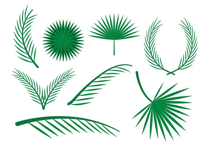vacation tropical summer plant paradise palm sunday palm nature leaf holiday green exotic decoration branch background