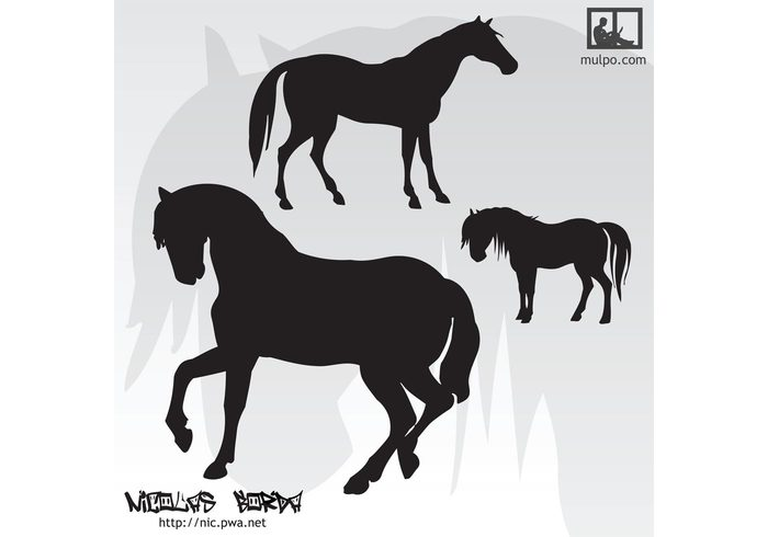 wild vector silhouettes illustrator illustration horses horse graphics freehand free vector design clip art background art animal