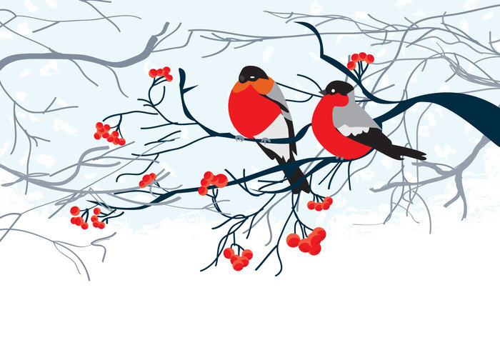 winter bird winter tree snow on branches snow landscape snow rowan red nature holiday ecology cold christmas bird christmas Cardinal bullfinch branch blizzard birdnature background birdnature bird background bird background