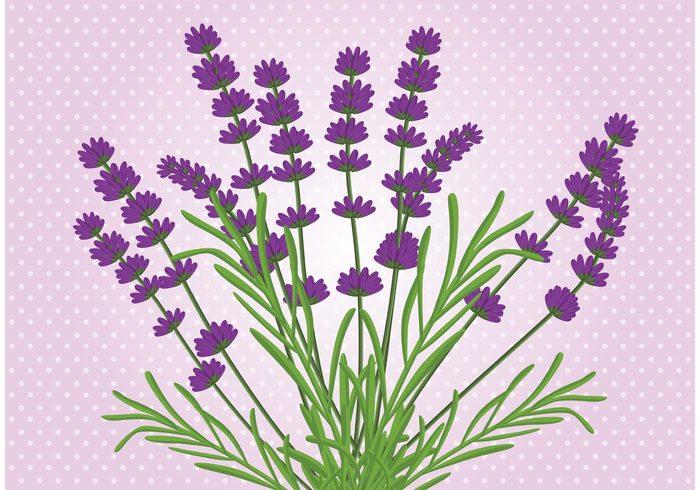 wild summer spring plant background plant nature lavender flower wallpaper lavender flower background lavender flower Lavender Herb flower botany background botany botanical bloom