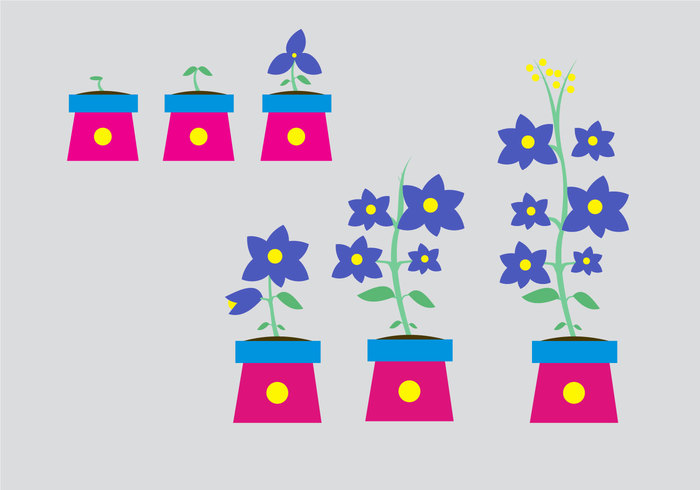 violet vector steps stem stage sprout seedling seed purple process planter plantation plant growth cycle plant petal organic nature life leaf growth growing grow gardening garden flower environmental ecology cycle Cultivated branch blossom blooming Biology