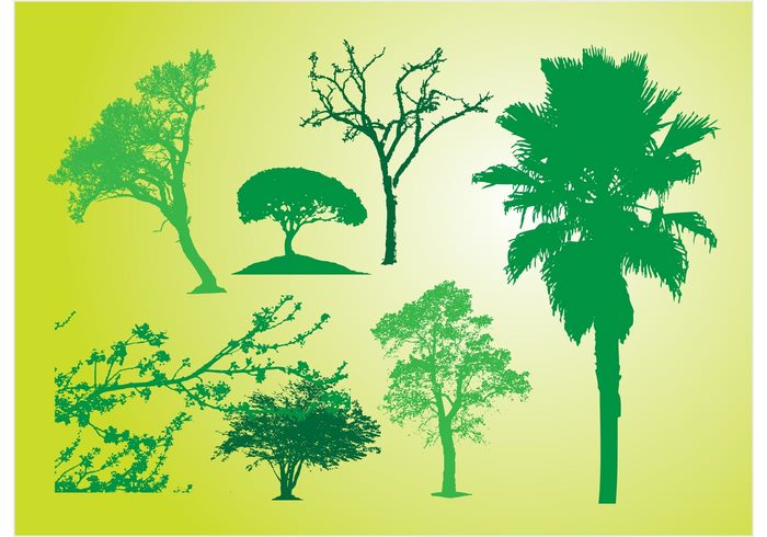 tree trace stem Single silhouette season palm nature leaf landscape green garden forest ecology branch bark autumn agriculture