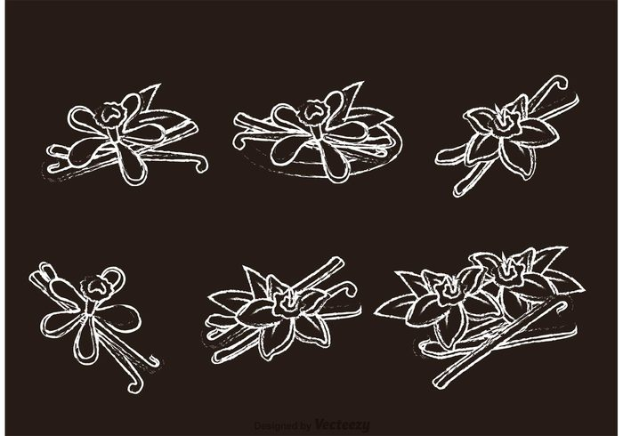 vanilla flower vanilla symbol sweet Spice sign season plant perfumed organic nutrition nature natural isolated Herb flower floral flavor botany aromatic