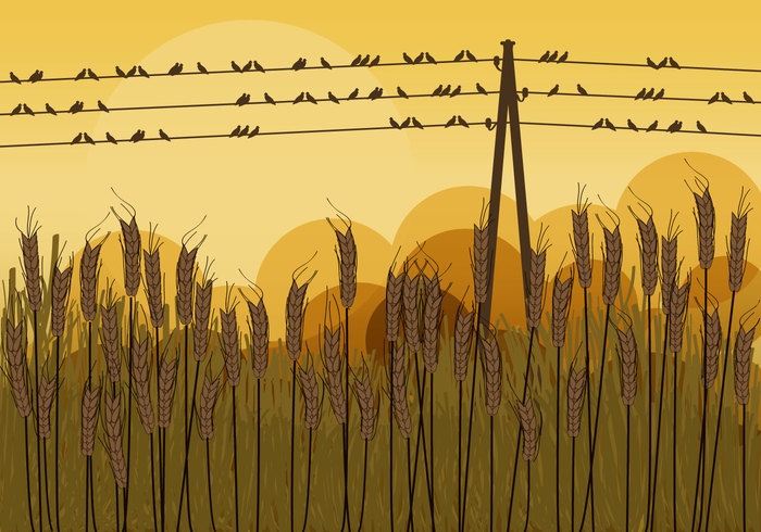 wire wild vector telephone sunset sun still spring Sleep sit silhouette set seasonal reed post pole Ornithology nature Migration illustration harvest group grass graphic forest fly flora flock fauna farmer farm Fall evening Europe electricity electric ecology design decoration creative country birds on a wire birds beautiful background autumn artwork art animals america agriculture
