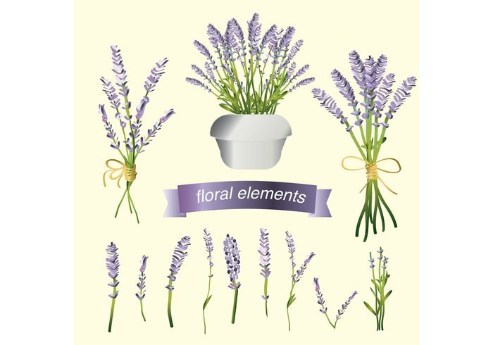 summer Spice purple provence potted plant plant organic nature natural lavender flower Lavender Ingredient House plant herbal Herb garden fresh flower floral eating cooking bunch bouquet botany botanical blossom aromatic