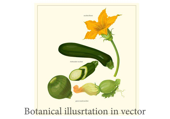 zucchini flower zucchini white village vegetarian vegetable vector tomato symbol summer set salad root raw pumpkin Products organic nature natural menu market kitchen Ingredient Healthy harvest grocery green gourmet garlic garden fresh food festival farmers eco drawing design Cucumber corn cooking collection cartoon carrot card cabbage botanical beetroot beet background autumn agriculture