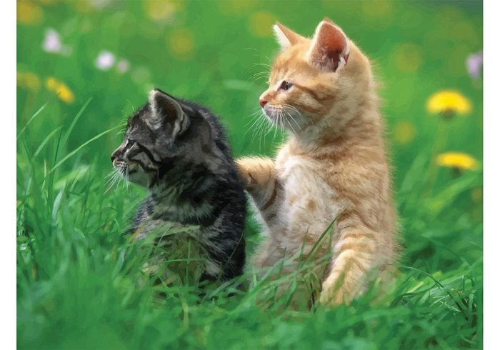 white wallpaper playing nature Kittens kitten green grass ginger field bright black background Baby cat
