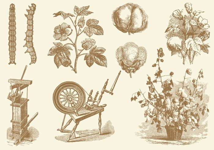 white vintage vector Textile symbol style Softness soft sketch silhouette sign shop quality print plant picture pattern original organic nature natural material illustration icon health hand growth growing grow fluffy flower floral fiber farm fabric engraving ecology drawn drawing design decoration cotton plant cotton clothes bud brunch branch bio ball background agriculture