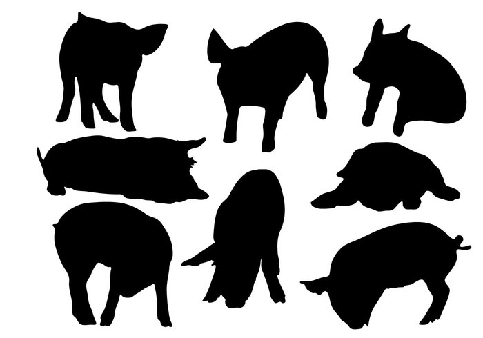 white vector symbol Swine silhouette set pork piglet pig outline meat mammal Livestock isolated hog farm element design collection black animal