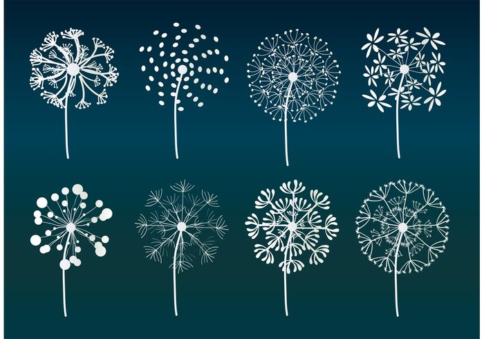weed tranquil summer flower summer stem seeds seed plant nature natural growth grass Fluff flower delicate dandelion seed dandelion flower dandelion botany blossom Biology
