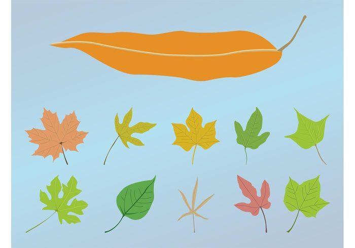 trees season plants organic nature natural foliage flora Fall ecology eco decorative decorations autumn