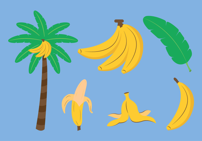vitamin tropical Tropic tree sweet summer slice skin Ripe plant palm organic nature natural leaf jungle Healthy green fruit fresh food exotic delicious bunch of banana bunch bananas banana tree banana slice banana skin banana leaf banana